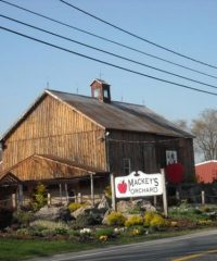 Mackey's Orchard