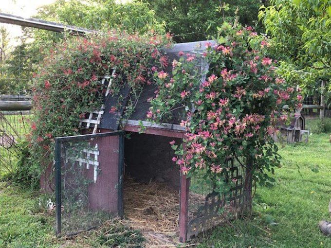 Summer Solstice Farm